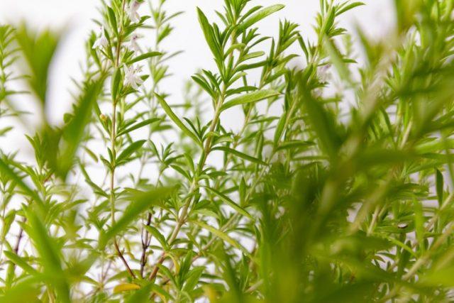 Naturopathie : tout savoir sur les plantes médicinales